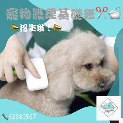 寵物護理基礎課程 Profile Picture
