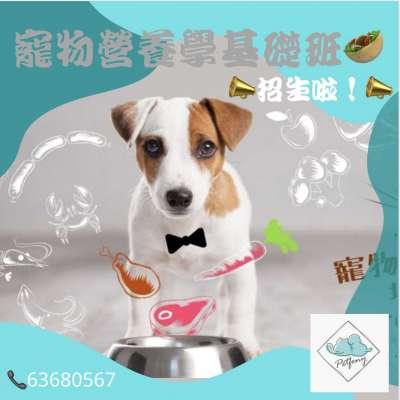 寵物營養學基礎課程 Profile Picture